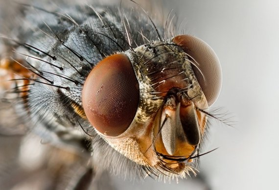 Промоция Капан за мухи