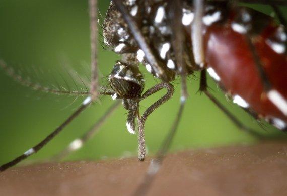Промоция Уреди против комари